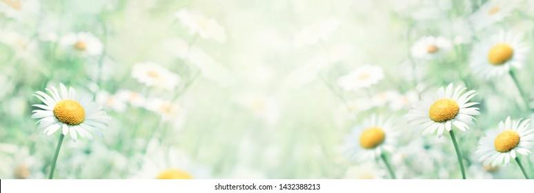 Sommerfeld mit Gänseblümchen, weiche blaue Töne, waagerechter, heller Naturhintergrund.