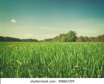 Summer field with long green grass, retro toned
