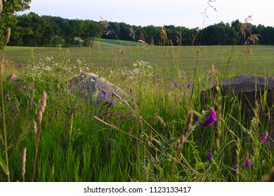Summer Field in Michigan