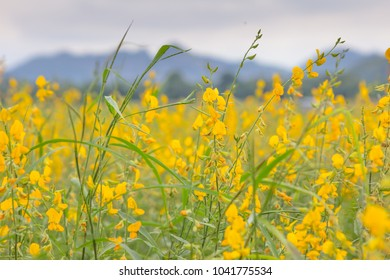 Rapeseed flower images stock photos vectors shutterstock summer field of yellow flowers mightylinksfo