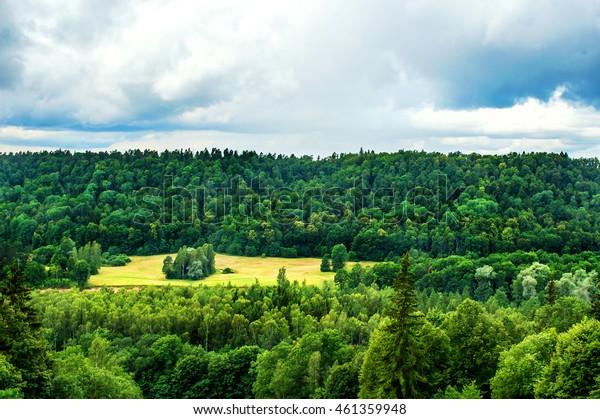 summer fields in Latvia