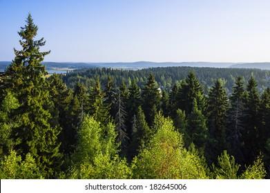 Summer fir forest landscape (Karelia, Russia)