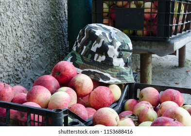 Summer fishing hat and box of red and white apples on grey background