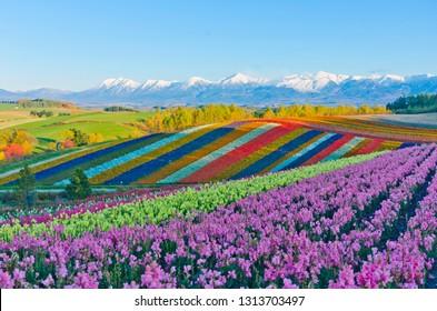 Summer Flower Fields in Biei, Hokkaido