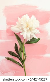Summer flower Peony Vertical Print. White peony on background of brush strokes of soft coral shades.   - Shutterstock ID 1442445227