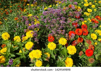 Summer flowerbed in a park
