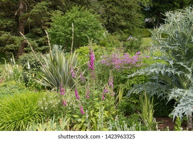 Summer Flowering Herbaceous Border (Foxgloves, Cardoon and Meadow Rue) in a Country Cottage Garden in Rural Somerset, England, UK