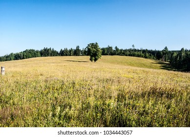 summer flowering meadow with isolated tree, forest around and clear sky above Prostredni Lipka village near Kraliky city in Czech republic