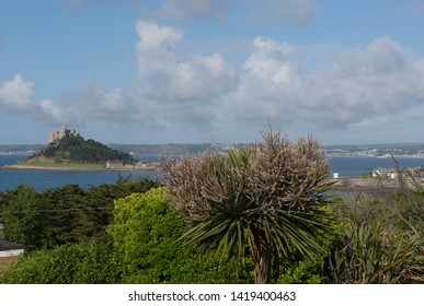 Summer Flowering Palm Tree with St Michael's Mount in the Background in the Seaside Town of Marazion in Cornwall, England, UK