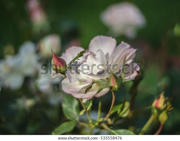 Summer flowers in Botanic Garden