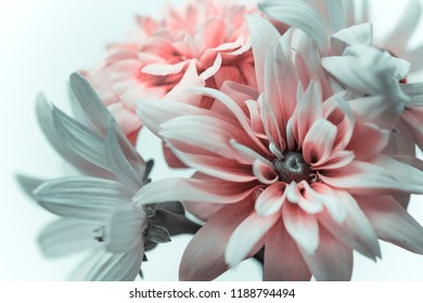 summer flowers, bouquet with pink petals, white background.