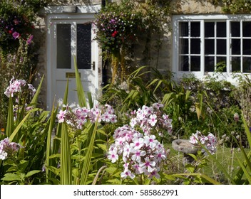Summer flowers in cottage garden