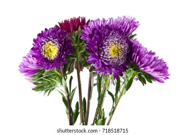 summer flowers isolated on white background close-up