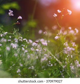 summer flowers meadow. Shallow depth of field