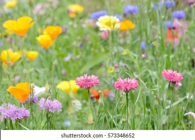 summer flowers in the nature