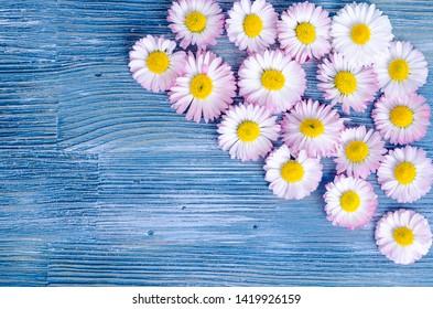 Summer flowers on blue wooden background. Studio Photo