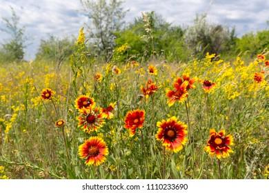 summer flowers on meadow in steppe
