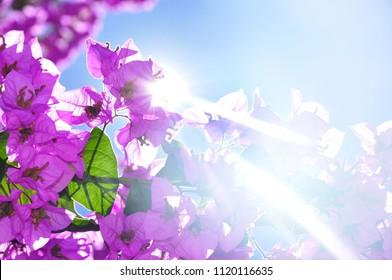 Summer flowers on sky sun flare