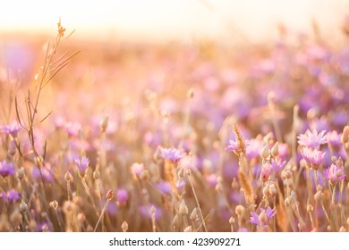 Summer flowers on sunset background