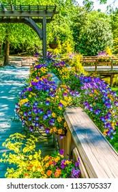 Summer Flowers on Wood Deck Railing