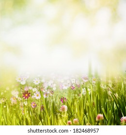 Summer forest, abstract natural backgrounds