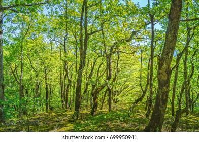 Summer forest against blue sky natural background