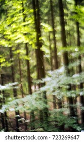 Summer forest background. Out of focus.