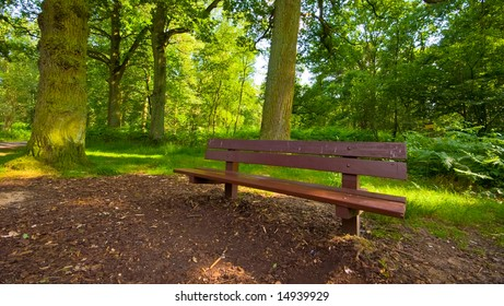 summer forest bench in a serene environment