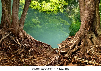 Summer forest landscape with blue haze and crooked roots