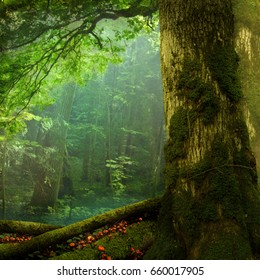 Summer forest landscape, mossy tree, green foliage, shaped branch, haze, red mushrooms
