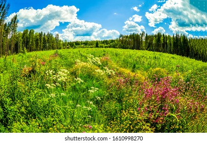 Summer forest meadow flowers landscape. Meadow flowers in summer. Forest meadow flowers in summer. Summer meadow flowers view
