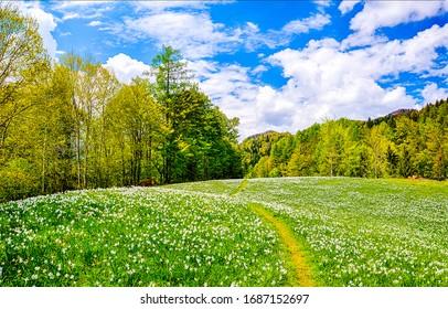 Summer forest meadow landscape. Flower field on sunny background - Shutterstock ID 1687152697