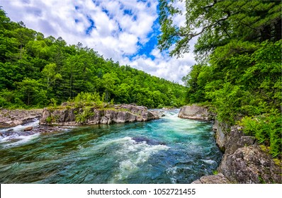 Summer forest river landscape