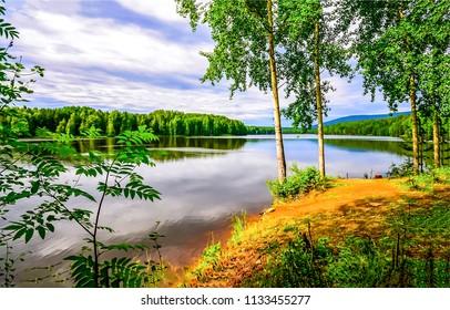 Summer forest river shore landscape. Forest river shore panorama. River shore in forest scene
