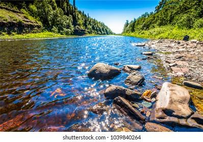 Summer forest river water landscape