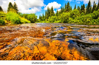 Summer forest river water view. Forest river water flow. Forest river water flowing. Forest river water view