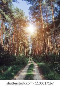 Summer forest. Sunlight
