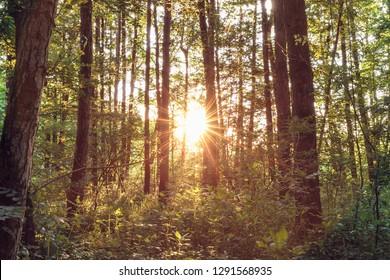 Summer Forest Sunset