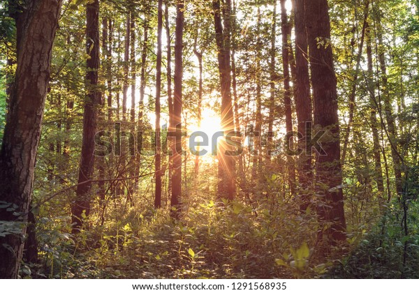 summer-forest-sunset-600w-1291568935.jpg
