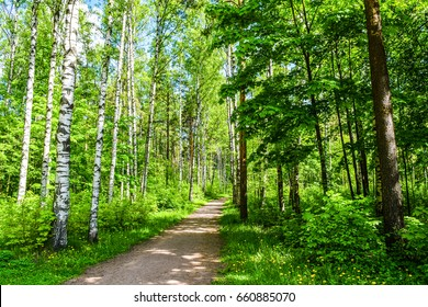 Summer forest trail landscape