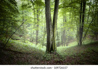 summer in forest with tree