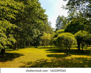 Summer forest trees shadows landscape. Summer green forest trees background. Forest trees in summer. Summer forrest