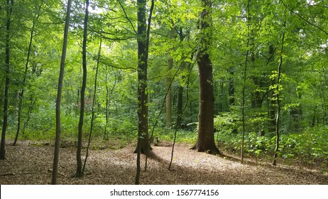Summer in the Forrest Sommer im Wald - Shutterstock ID 1567774156