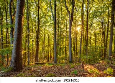 Summer Forrest Sunrise. Dawn in the forest of Bavaria, Germany