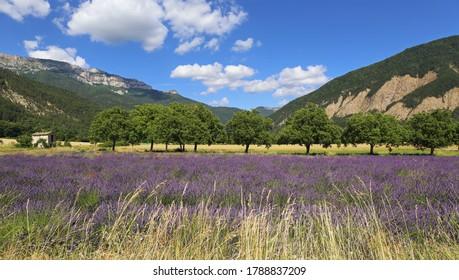 Paysage français d'été. Champ de lavande et montagnes. Département de la Drome Provençale