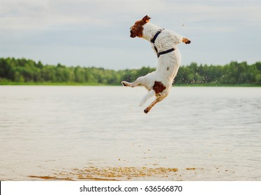 Summer fun at beach with dog jumping high in water