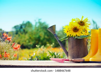 Summer garden background with garden tools and sunflowers