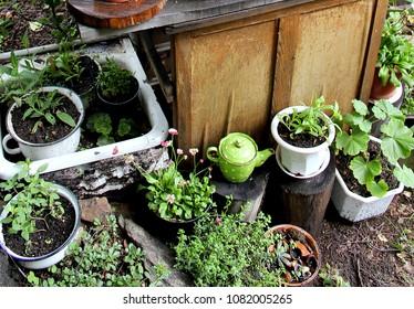 summer garden flowers in pots