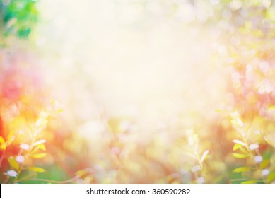 Summer Garden with Light Boke. Blurred Nature Abstract Background