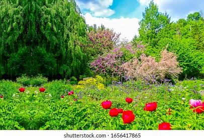 Summer garden on green nature scene